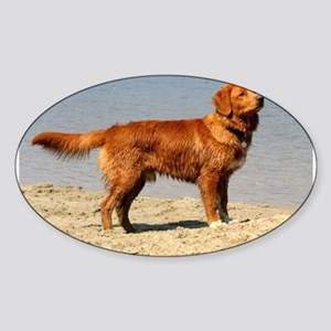 Nova Scotia Duck Tolling Retriever full Sticker
