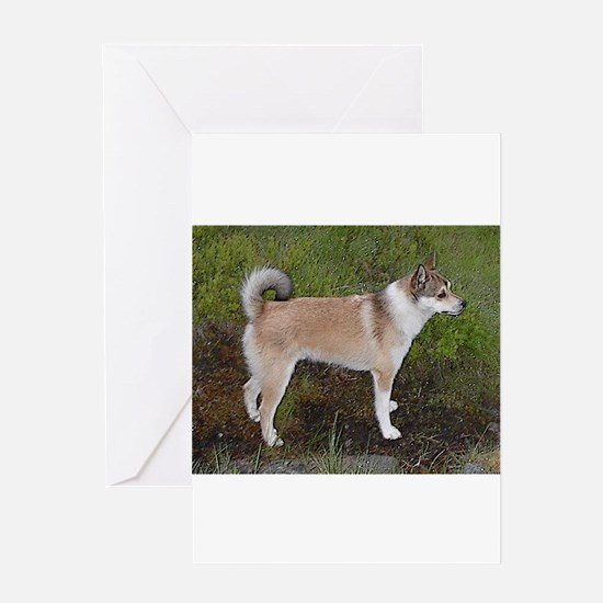 norwegian lundehund full Greeting Cards