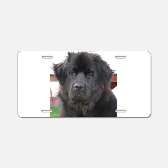 newfie 2 Aluminum License Plate