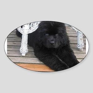 newfie 3 puppy Sticker