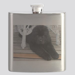newfie 3 puppy Flask