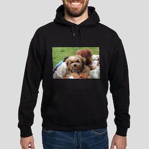Copper the Havapookie Sweatshirt
