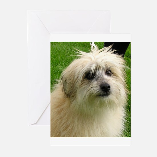 Pyrenean Shepherd Greeting Cards