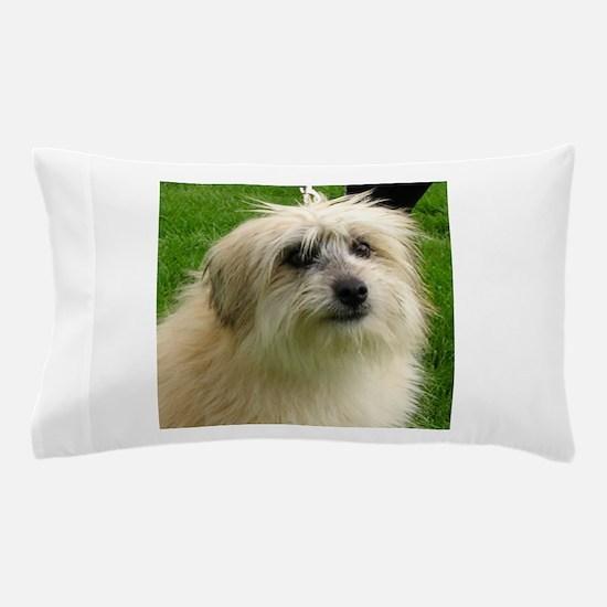 Pyrenean Shepherd Pillow Case