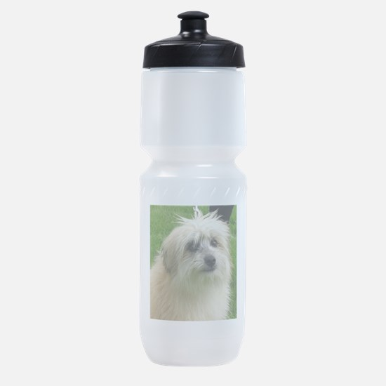 Pyrenean Shepherd Sports Bottle