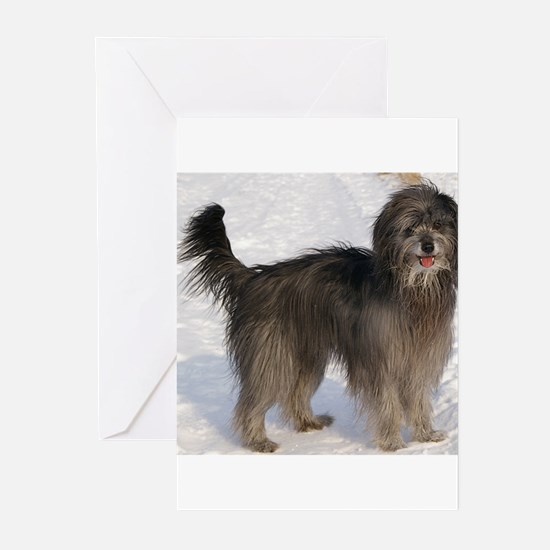 pyrenean shepherd full Greeting Cards