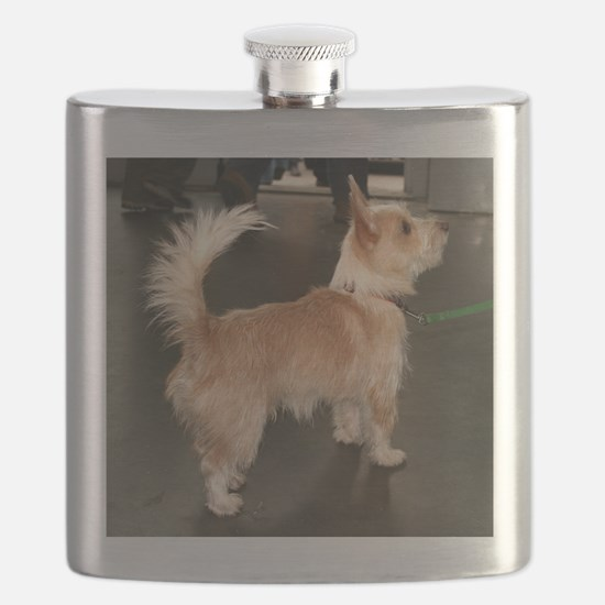 portuguses podengo full Flask