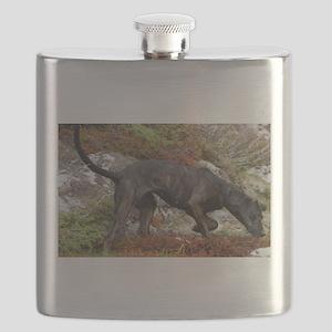 plott hound full Flask
