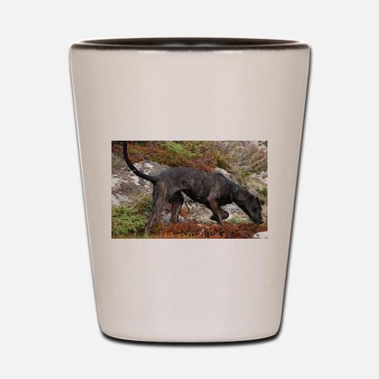 plott hound full Shot Glass