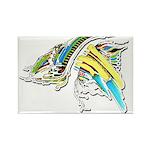 Design 160402 Magnets
