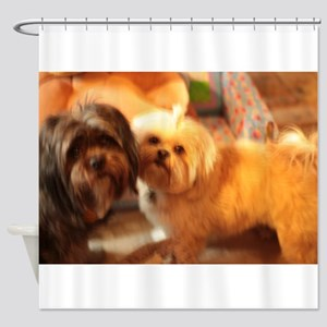 Kona and Koko dogs at play Shower Curtain