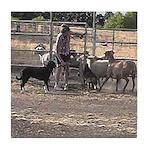 Herding Dog Art Tile Coaster