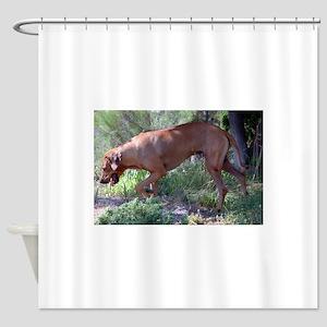 rhodesian ridgeback full Shower Curtain