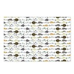Florida Inshore Fishes Postcards (Package of 8)