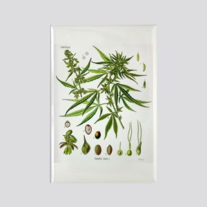 Cannabis Sativa Rectangle Magnet