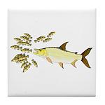 Giant Tigerfish attacks Jewel Cichlids Tile Coaste