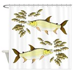 Giant Tigerfish attacks Jewel Cichlids Shower Curt