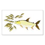 Giant Tigerfish attacks Jewel Cichlids Sticker