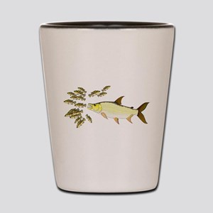 Giant Tigerfish attacks Jewel Cichlids Shot Glass