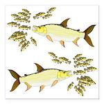 Giant Tigerfish attacks Jewel Cichlids Square Car