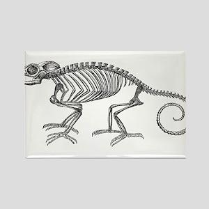 Vintage Chameleon Lizard Skeleton Lizards Magnets