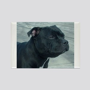 staffordshire bull terrier Magnets