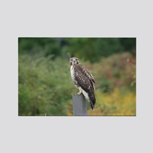 Red Tail Hawk Photograph Rectangle Magnet