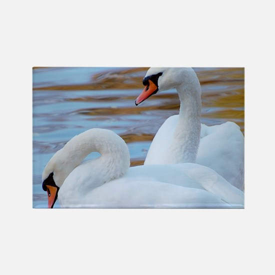 Beautiful Swans Magnets