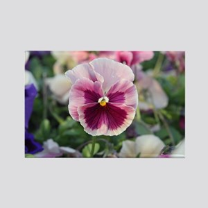Pink Pansy Rectangle Magnet