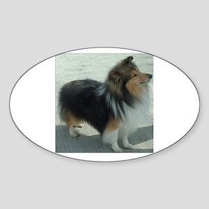 shetland sheepdog full Sticker