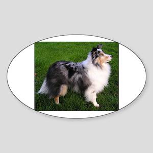 shetland sheepdog full 2 Sticker
