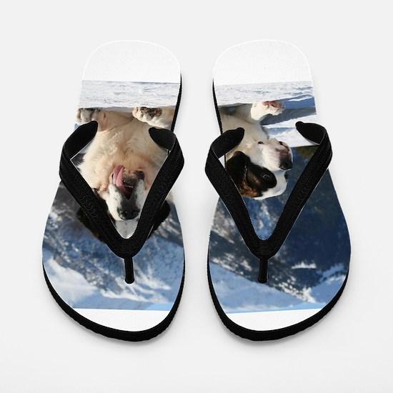 saint bernard group Flip Flops