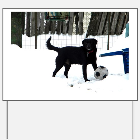 Unique Labrador playing Yard Sign