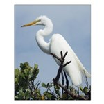White Egret On Mangrove Tree Posters Small Poster