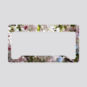 Spring Apple Tree Blossoms License Plate Holder