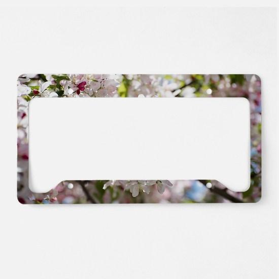 Spring Apple Tree Blossoms License Plate Holder