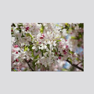 Spring Apple Tree Blossoms Magnets