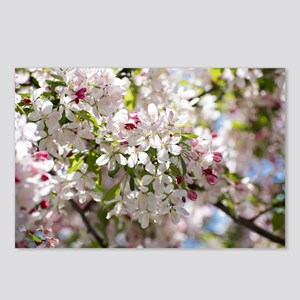 Spring Apple Tree Blossoms Postcards (Package of 8