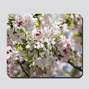 Spring Apple Tree Blossoms Mousepad