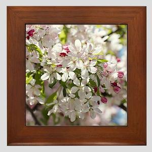 Spring Apple Tree Blossoms Framed Tile