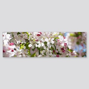 Spring Apple Tree Blossoms Bumper Sticker