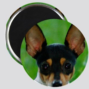 toy fox terrier Magnets