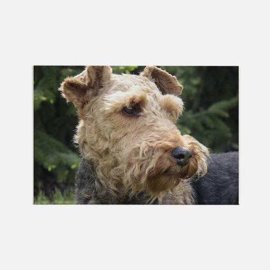 welsh terrier Magnets