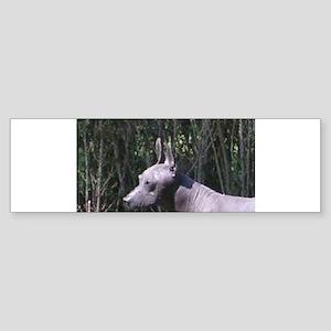 Xoloitzcuintli Bumper Sticker