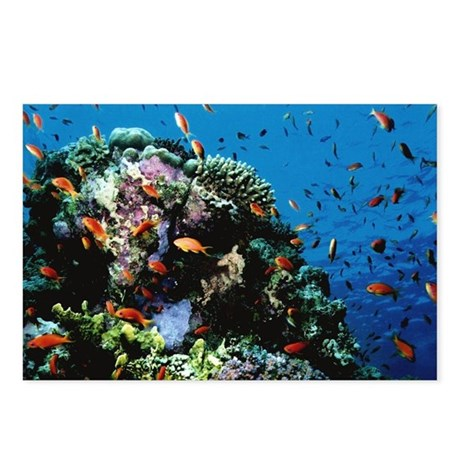 Antheas at Ras Mohammed dive site Egypt Postcards