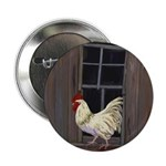 Rooster in the Window 2.25