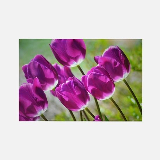 Funny Tulip garden Rectangle Magnet