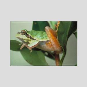 Tree Frog Rectangle Magnet