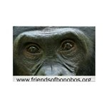 Friends Of Bonobos Rectangle Magnet (10 Magnets
