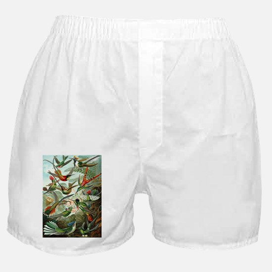 Vintage Hummingbirds Decorative Boxer Shorts